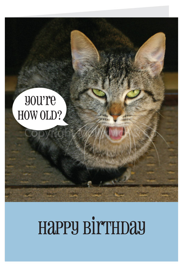 Happy birthday card cat happy birthday card cat bookmarktalkfo Images